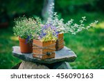 Beautiful Flower Pot With...