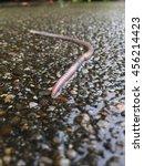 Earthworm On Wet Street