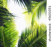 different palm tree leaves in... | Shutterstock . vector #45631051