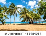 Beachfront With Palm Trees Of...
