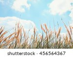 reeds of grass and blue sky... | Shutterstock . vector #456564367