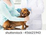 medicine  pet  animals  health... | Shutterstock . vector #456621943