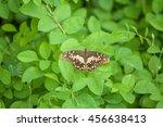 butterfly on a green leafs... | Shutterstock . vector #456638413