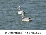 Two Pelicans Floating In The...