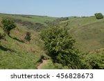 Hawthorn Tree  Crataegus...