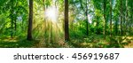 forest panorama with sun | Shutterstock . vector #456919687
