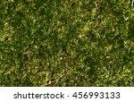 Beautiful Green Moss Backgroun...