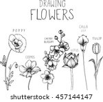 drawing flowers. poppy cosmos... | Shutterstock .eps vector #457144147