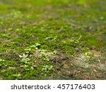 Green Moss And Wild Little...