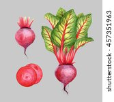 isolated watercolor beetroot on ... | Shutterstock . vector #457351963