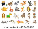 collection of funny pets... | Shutterstock .eps vector #457483933