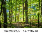 Bright Green Forest Natural...