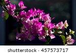 showy ornamental bracted ... | Shutterstock . vector #457573717