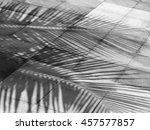 Palm Leaf Shadows On Street...