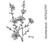 monochrome image chicory herb | Shutterstock .eps vector #457622797