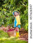 kids picking cherry on a fruit... | Shutterstock . vector #457626547