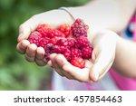 raspberries in the hands of the ... | Shutterstock . vector #457854463