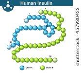 human insulin hormone molecule  ... | Shutterstock .eps vector #457930423