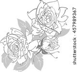 roses line drawing | Shutterstock .eps vector #457989367