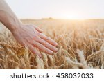 crop of wheat  close up of hand ... | Shutterstock . vector #458032033