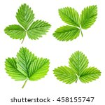 Green Strawberry Leaf Isolated...