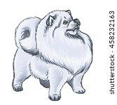 illustration of a fluffy white...   Shutterstock . vector #458232163