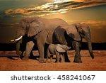 baby african elephant ... | Shutterstock . vector #458241067