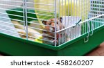 brown syrian hamster gnaws... | Shutterstock . vector #458260207