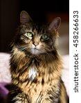 dramatic lighting portrait of a ... | Shutterstock . vector #458266633