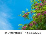 blossoming trees on blue sky... | Shutterstock . vector #458313223
