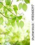 the fresh green  the outdoors ...   Shutterstock . vector #458368297