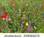 flower meadow  wildflowers | Shutterstock . vector #458466673