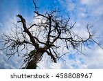 dead fig tree after a drought...   Shutterstock . vector #458808967