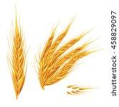 ears of wheat on white... | Shutterstock . vector #458829097