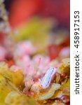Small photo of Nudibranchia