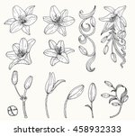 lily flower vector by hand... | Shutterstock .eps vector #458932333