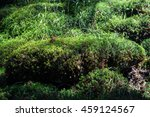 Moss In The Thick Summer Forest