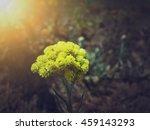 Beautiful Wild Yellow...