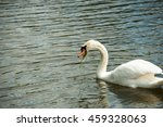 graceful swan on a lake    | Shutterstock . vector #459328063