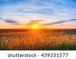 Landscape Of Wheat Field Under...
