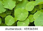 green leaves | Shutterstock . vector #45936544