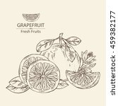 background with grapefruit .... | Shutterstock .eps vector #459382177