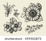 flowers. hand drawn sketch... | Shutterstock .eps vector #459502873