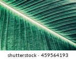 details of large leaf  close up ... | Shutterstock . vector #459564193