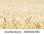 wheat field. ears of golden... | Shutterstock . vector #460036783