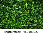 background made of fresh  green ... | Shutterstock . vector #460183027