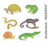 reptiles and amphibians... | Shutterstock . vector #460235947