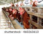 eggs chickens on the local farm   Shutterstock . vector #460263613