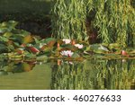 water lilies in the park of the ... | Shutterstock . vector #460276633