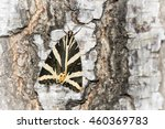 tiger moth euplagia...   Shutterstock . vector #460369783